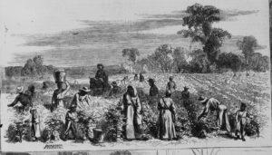picking cotton (Illus. in: Harper's weekly, 1867 Feb. 2, pp. 72-73. ; LOC: https://www.loc.gov/item/96513748/)