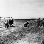 Grain cradle in use in the field (http://www.gutenberg.org/files/27327/27327-h/27327-h.htm)
